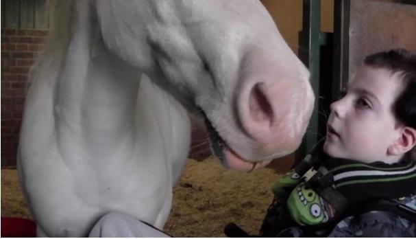 Horse inclusion